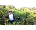 Honduras Lempira - Wet Process - Green Coffee Beans