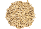 Oat  Malt - Thomas Fawcett Malting