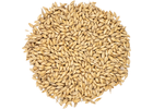 Gallagher's Best Pale Malt - Admiral Maltings