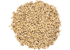 Viking 2 Row Pale Malt