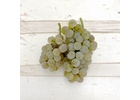 Chardonnay, Livermore Valley CA 2020 (Frozen Grapes, 6 Gallon Pail)