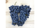 Cabernet Sauvignon, Livermore Valley CA 2021 (Frozen Grapes, 6 Gallon Pail)