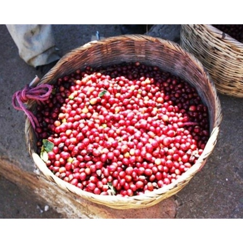 El Salvador Las Isabellas - Natural Process - Green Coffee Beans