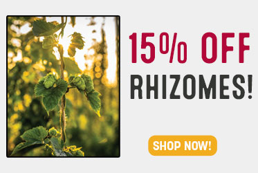 MoreBeer! Deal of the Day!