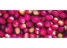 Colombia Huila Region - Green Coffee Beans