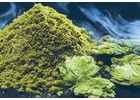 Simcoe® Brand YCR 14 CRYO HOPS® (LupuLN2 Powder) 1 oz.