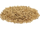 Great Western Malting Premium 2-Row (55 lb Sack)