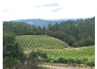 Brehm Fruit - Petit Verdot - Plum Ridge Vineyards, Sonoma Valley AVA, CA 2012