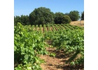 Brehm Fruit - Zinfandel - Dos Limones Vineyard, Sonoma Mountain AVA, CA 2020