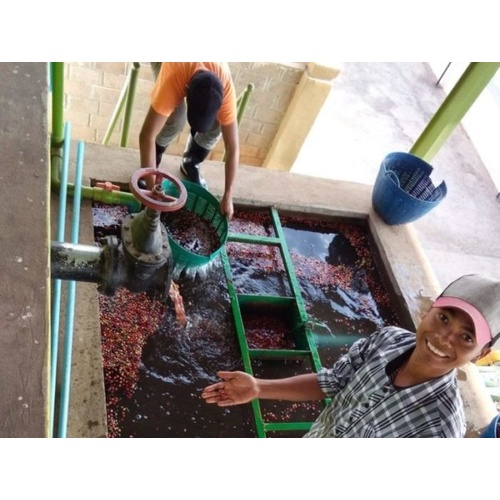 Myanmar Ywangan - Wet Process - Green Coffee Beans